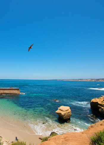 Image of La Jolla cove for locals guide