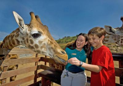Image of zookeeper and child petting giraffe at San Diego Zoo Safari Park