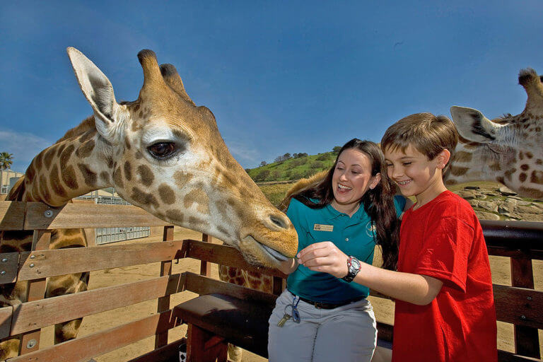 Image of zookeeper and child petting giraffe at San Diego Zoo Safari Park
