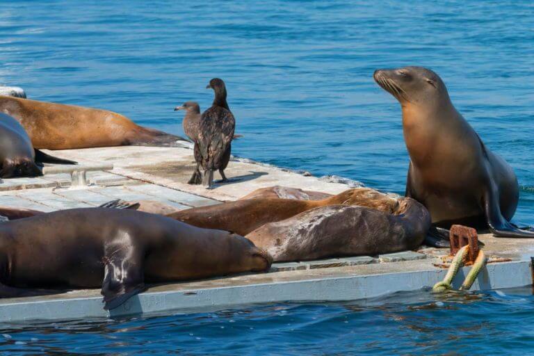 San Diego Seals & Sea Lions