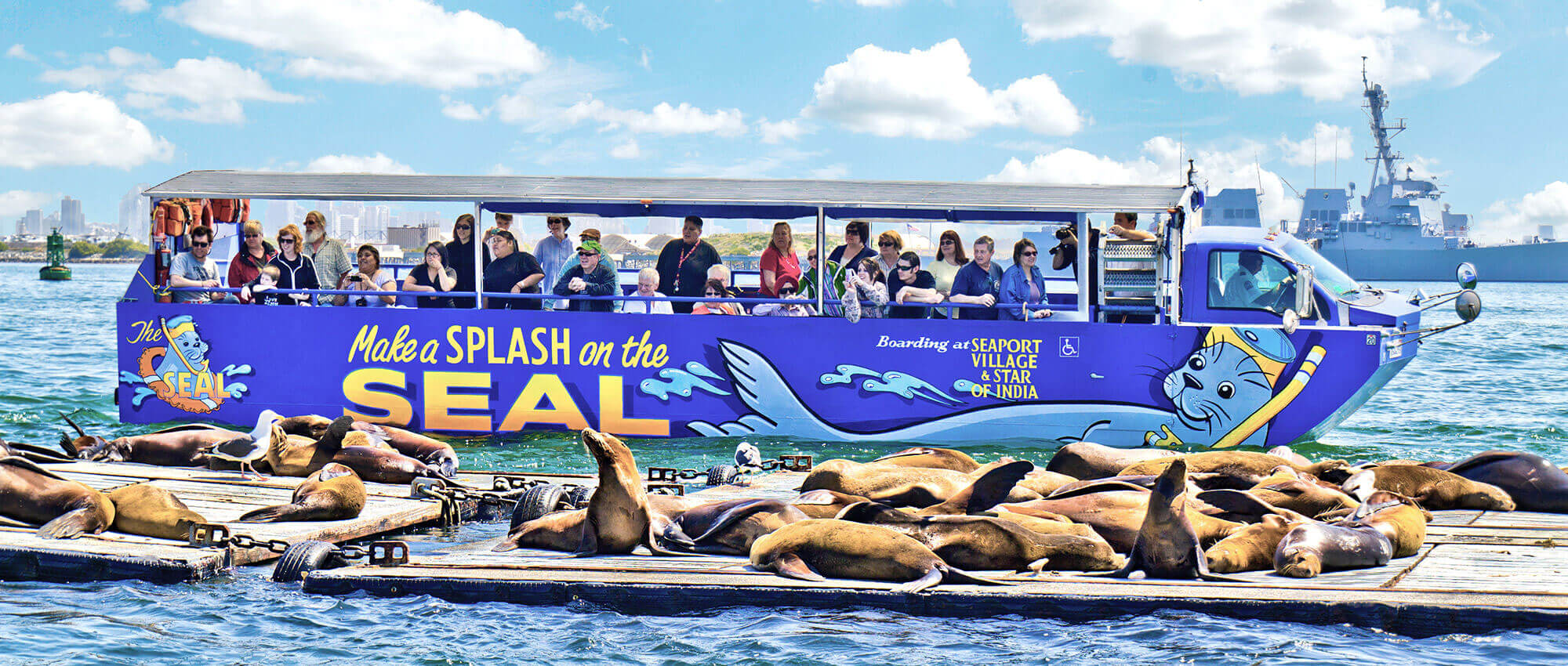 San Diego Seals & Sea Lions
